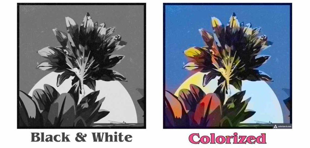 Black And White Photo Ko Colour Photo Me Kaise Change Kare?